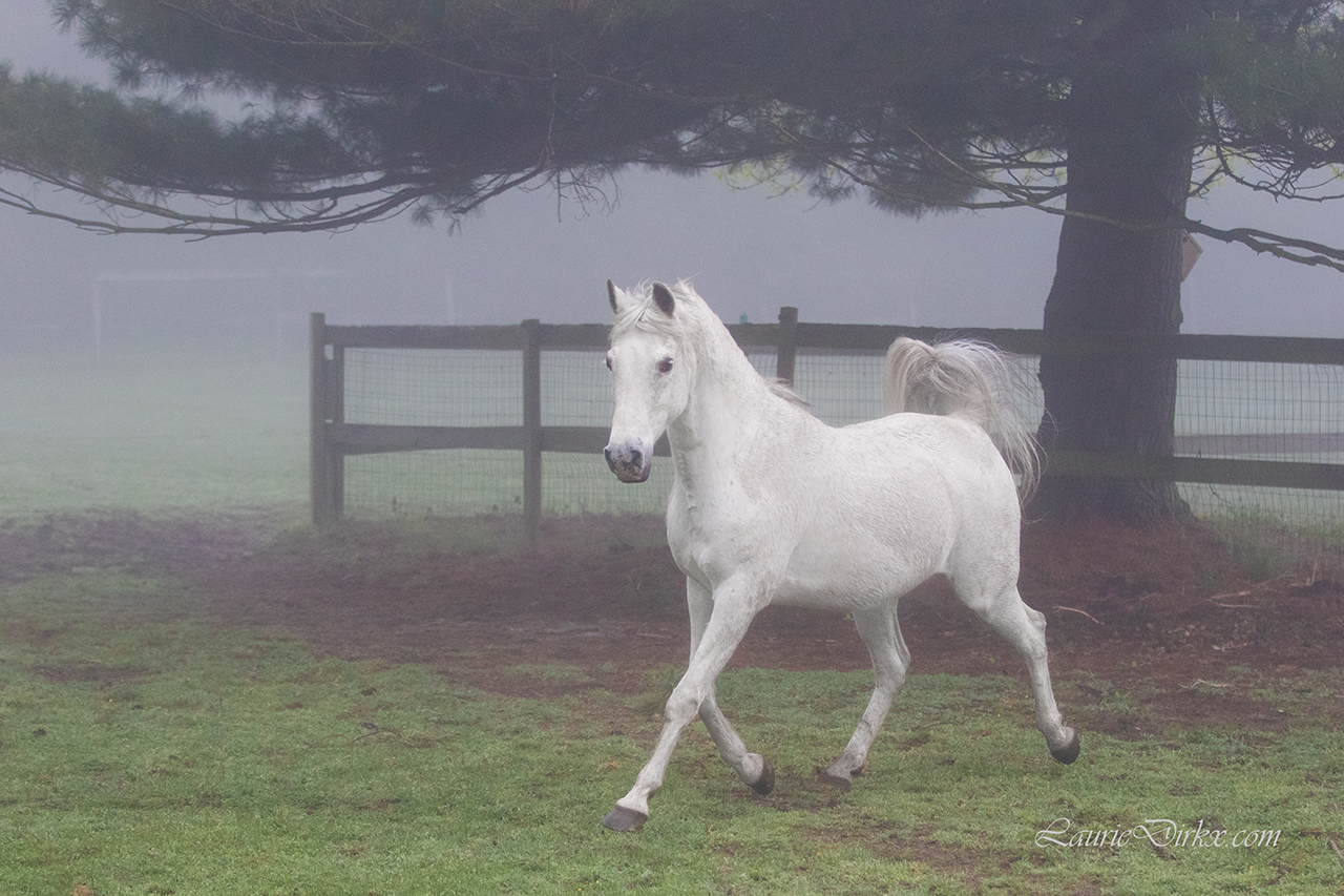Pretty in Fog in Ontario County (photo)